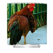 Rooster By The Fence Shower Curtain