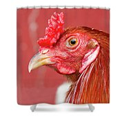Rooster Close-up On A Reddish Background Shower Curtain