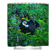 Rooster Grouse Posing Shower Curtain