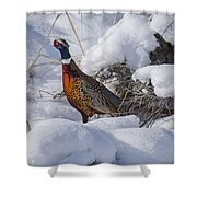 Rooster In The Snow Shower Curtain