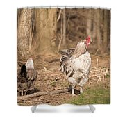 Rooster In The Woods. Shower Curtain