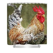 Rooster Jr. Strut Shower Curtain