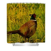 Rooster Pheasant Shower Curtain