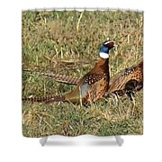 Rooster Pheasants Shower Curtain