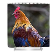 Rooster Rooster Shower Curtain by Mike  Dawson