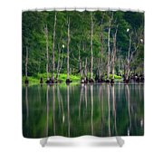 Roosting Egrets Shower Curtain