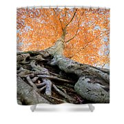 Root Of The Matter Shower Curtain