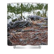 Rooted Lake Edge Shower Curtain