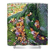 Roots And Leaves Shower Curtain
