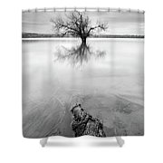 Roots And Trees Shower Curtain
