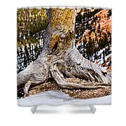 Roots Gripping The Edge Shower Curtain