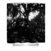 Roots Of Life Shower Curtain
