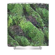 Roots Of The Ages Shower Curtain by Tim Allen