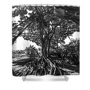 Roots To Roof Shower Curtain