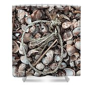 Rope In Shells Shower Curtain