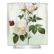 Rosa Bengale The Hymenes Shower Curtain by Pierre Joseph Redoute
