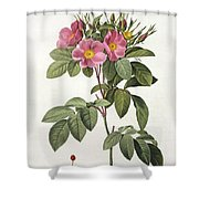 Rosa Carolina Corymbosa Shower Curtain