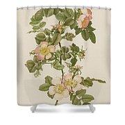 Rosa Hibernica Shower Curtain