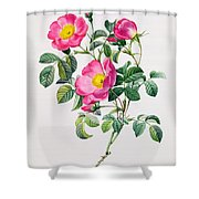 Rosa Lumila Shower Curtain
