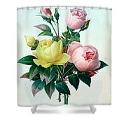 Rosa Lutea And Rosa Indica Shower Curtain by Pierre Joseph Redoute