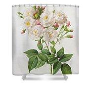 Rosa Noisettiana Shower Curtain by Pierre Joseph Redoute