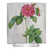 Rosa Turbinata Shower Curtain