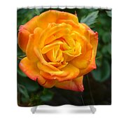 Rose - Irish Eyes Shower Curtain
