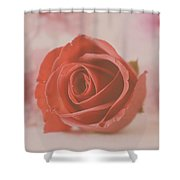 Rose #004 Shower Curtain