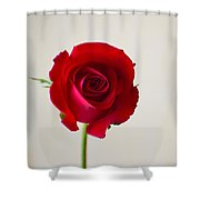 Rose #022 Shower Curtain