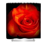 Rose 2 Shower Curtain