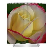 Rose 3913 Shower Curtain