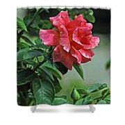 Rose 7898 Shower Curtain
