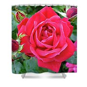 Rose And Buds - Double Knock Out Rose Shower Curtain