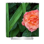 Rose And Day Lily Lives Shower Curtain