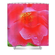 Rose And Raindrops Shower Curtain