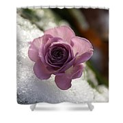 Rose And Snow Shower Curtain