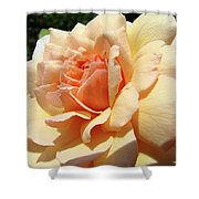 Rose Art Peach Orange Roses Sunlit Florals Giclee Baslee Troutman Shower Curtain