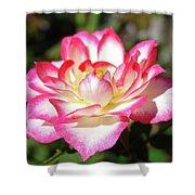 Rose Art Prints Pink White Roses Garden Baslee Troutman Shower Curtain
