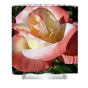 Rose Artwork Floral Pink White Roses Baslee Troutman Shower Curtain
