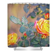 Rose At Sunset Shower Curtain