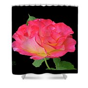 Rose Blushing Cutout Shower Curtain