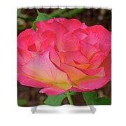 Rose Blushing Shower Curtain