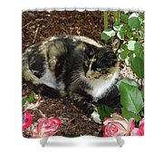 Rose Bower For A Cat Shower Curtain