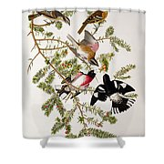 Rose Breasted Grosbeak Shower Curtain by John James Audubon