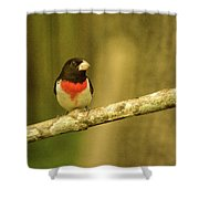 Rose Breasted Grossbeak Eying You Shower Curtain