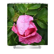 Rose Bud And Bee Shower Curtain