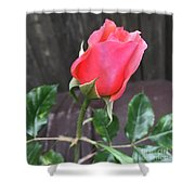 Rose Bud Shower Curtain