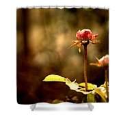 Rose Buds Shower Curtain