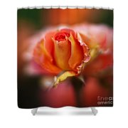 Rose Centerpiece Shower Curtain