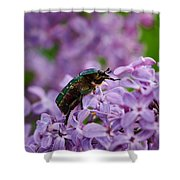 Rose Chafer On Lilac Shower Curtain